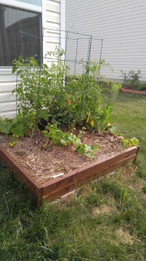 The garden bed. Not sure why the front is so barren. Got a single bush bean to germinate, and what I think is a radish.